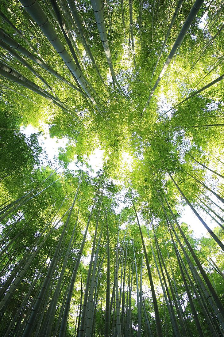 Besprechen von Krankheiten - Licht in Baumkronen