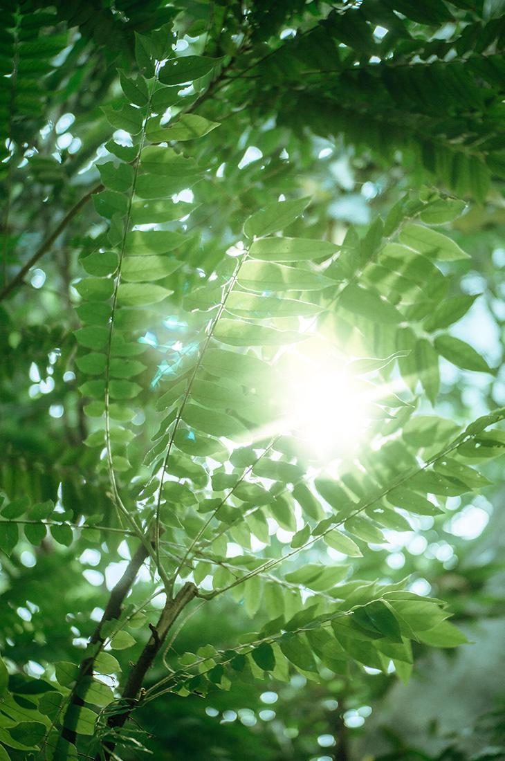 Besprechen von Krankheiten - Sonnenlicht schimmert durch grünes Laub