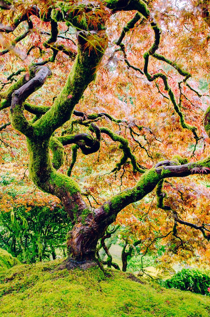 Besprechen von Krankheiten - Lebenslauf - Baum