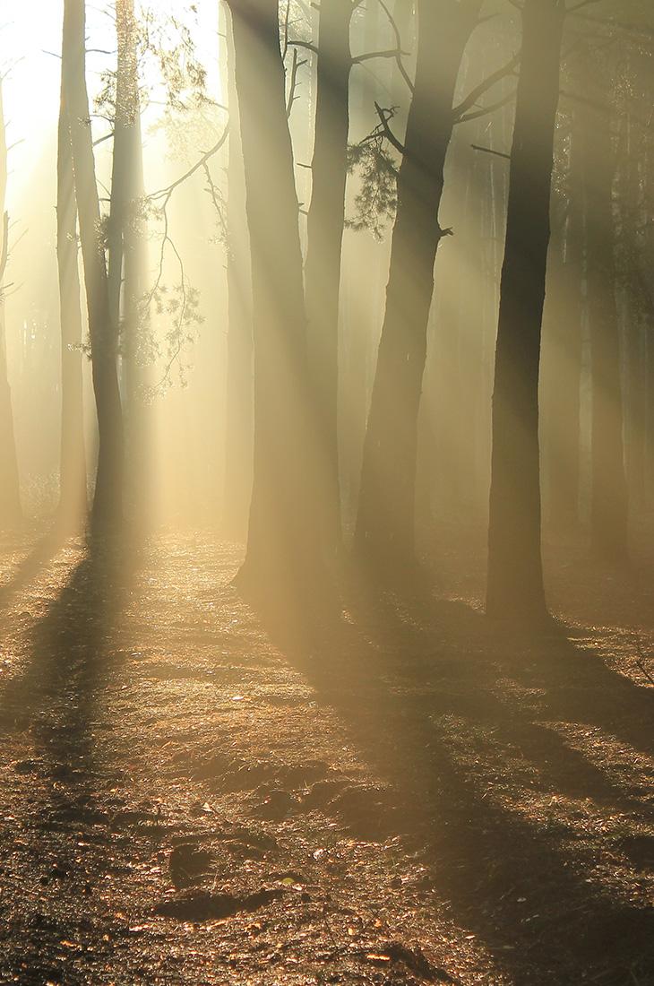 Besprechen von Krankheiten - Licht im Dunkel des Waldes