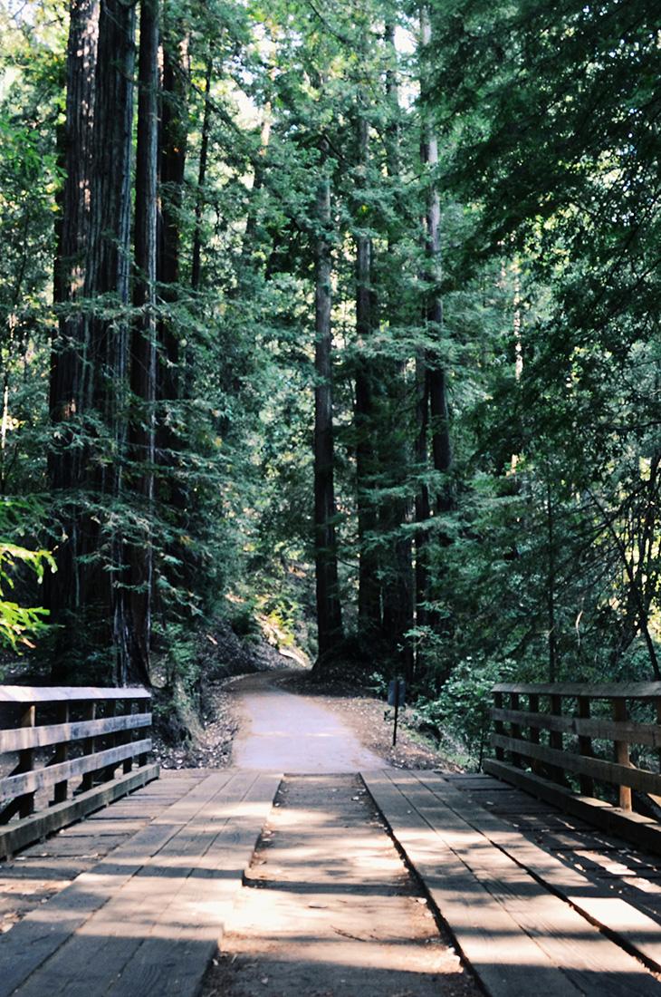 Besprechen von Krankheiten - Brücke und Pfad durch einen Wald