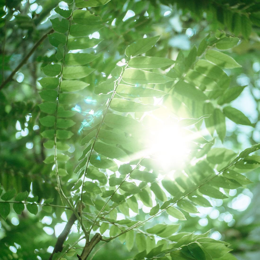 Krankheiten besprechen - Sonne scheint durch grünes Laub