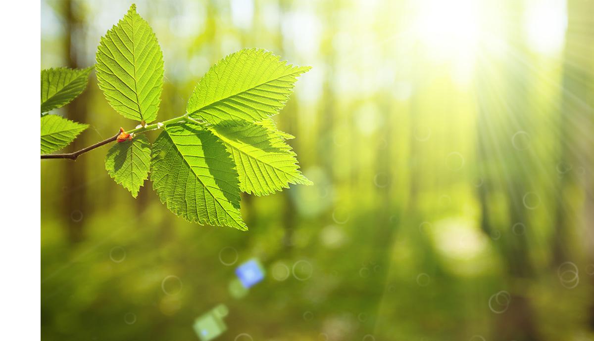 Besprechen von Krankheiten - Blatt vor Wald mit Licht der Sonne