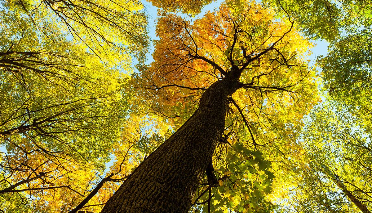 Besprechen von Krankheiten - Laubbäume im Herbst vor Sonnenlicht